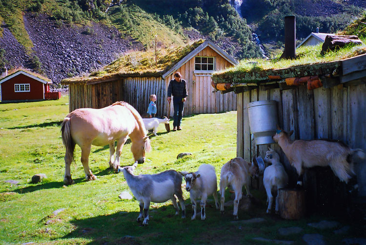 Herdalssetra mountain summer farm and dale fjord farm - Trout farming business family mountains ...